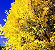 Gingko Tree by Chet  King