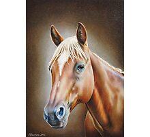 Horse Portrait Photographic Print