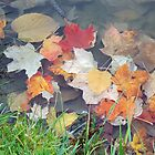 Floating Leaves - Fall 2012 by Barbara Storey