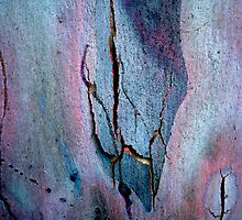Bark Abstract # 4 by Frederick James Norman