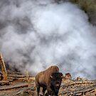 Steamed Bison by JamesA1