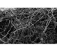 Interwoven Photographic Print