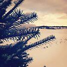 Winter Pine by Josrick