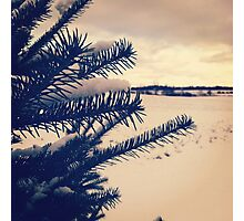 Winter Pine Photographic Print