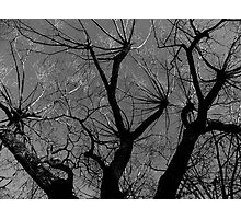 Infinity Branching Photographic Print