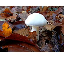 White Wonder of the Forest Floor Photographic Print