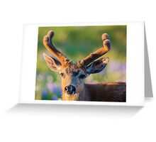 Blacktail Buck Greeting Card