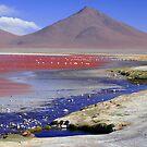 Laguna Colorada, Bolivia by Natasha M