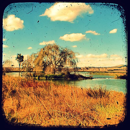 Dangars Lagoon Willow - Through The Viewfinder (TTV) by Kitsmumma