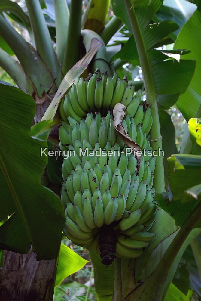 Ladyfinger Banana Bunch by Kerryn Madsen-Pietsch