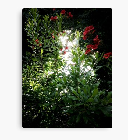Bright Light Canvas Print