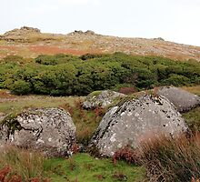 Boulders At Black-A-Tor Copse, Dartmoor by Lawrence Dyer