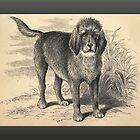 Vintage Otterhound Greetings by Yesteryears