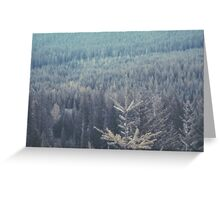 Forestry III Greeting Card
