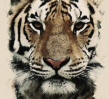 tiger of asia by Adam Asar