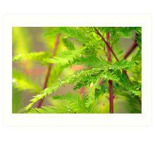 Green Cypress  Art Print