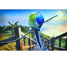 love birds and majestic landscape 3 Photographic Print