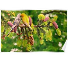 love birds on pine tree Poster