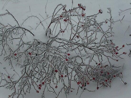 HAPPY  HAPPY  HAPPY.... MERRY CHRISTMAS - VETRINA  RB EXPLORE 26 DICEMBRE 2012 -- by Guendalyn