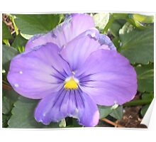 Flower Plant  Poster