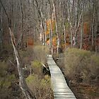 The Boardwalk by Eileen McVey