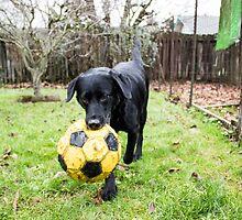 Soccer by DustysPhotos