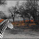 Zebra and Bush Fire by ten2eight