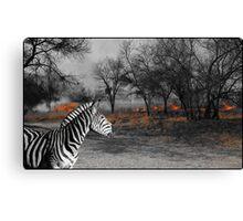 Zebra and Bush Fire Canvas Print