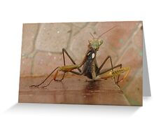 Praying Mantis Making Eye Contact Greeting Card