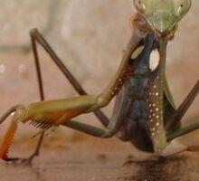 Praying Mantis Making Eye Contact Sticker