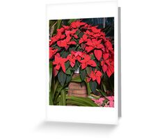 Basket Of Poinsettia Greeting Card