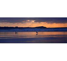 Bird on the Beach Photographic Print
