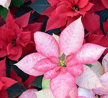 Christmas Poinsettia by Kathleen Struckle