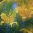 """lillium world..."" by David Murphy"