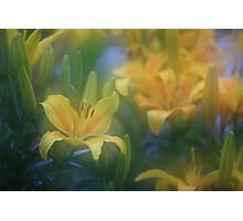 """lillium world..."" Photographic Print"
