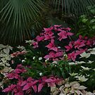 Poinsettia by Kathleen Struckle