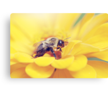 Bee on Yellow Canvas Print