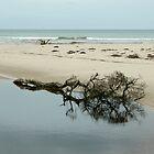 Sister's Beach Driftwood, Northern Tasmania, Australia. by kaysharp
