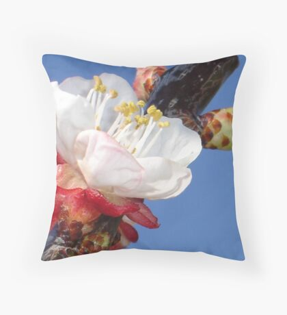 Apricot Blossom Throw Pillow