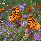 Shimmery Fritillary by Arla M. Ruggles