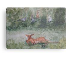 Kangaroos. Metal Print