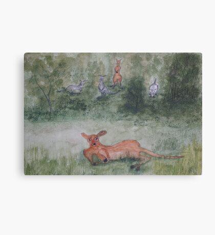 Kangaroos. Canvas Print