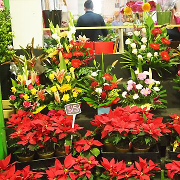 Flowers at the Preston Market; ready for Christmas .. Melbourne by Margaret Morgan (Watkins)