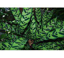 zebra plant Photographic Print