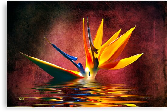 Bird of Paradise 7 by George Lenz