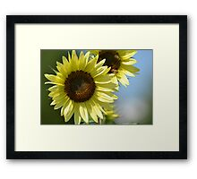 Two Summer Sunflowers Framed Print