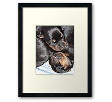 A Beautiful Dreamer In A Litter of  Rottweiler Puppies Framed Print
