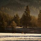 Horses in the Morning by Matt Emrich