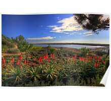Red Hot Aloes Poster
