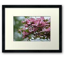 Pink Dogwood Flower Framed Print